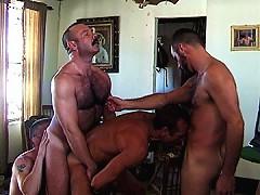 Four bears suck and fuck hairy dicks